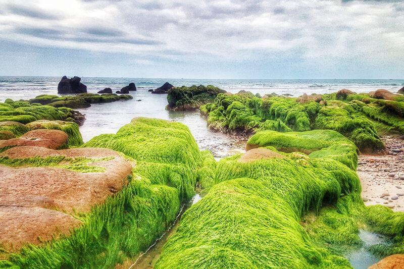 Tại sao rêu ở cạn nhưng chỉ sống ở chỗ ẩm ướt