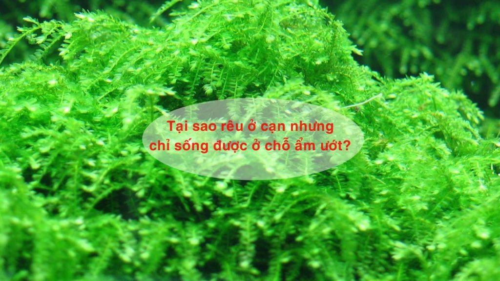 tai sao reu o can nhung chi song duoc o cho am uot 3 1