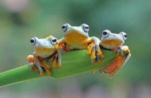 Vì sao ếch thường sống ở nơi ẩm ướt gần bờ nước và bắt mồi về đêm?