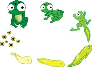vì sao ếch thường sống ở nơi ẩm ướt gần bờ nước và bắt mồi về đêm