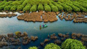 Tại sao người ta lại nói rừng cây như một lá phổi xanh của con người?