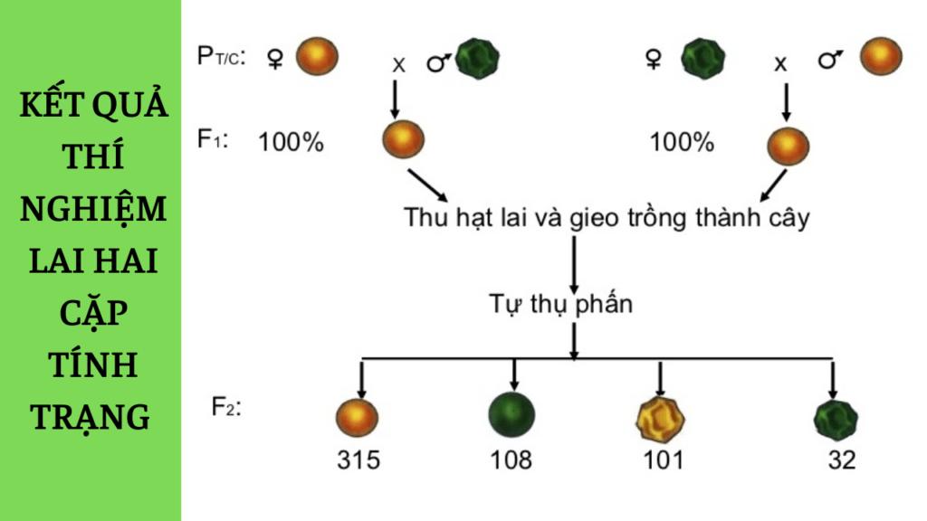 Menđen đã giải thích kết quả thí nghiệm trên đậu Hà Lan như thế nào?