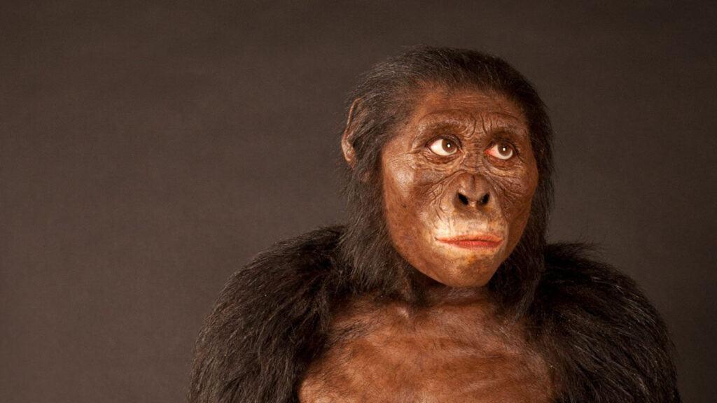 Quá trình tiến hóa của loài người diễn ra như thế nào?