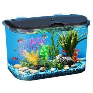 Tại sao khi nuôi cá cảnh trong bể kính người ta thường thả thêm vào bể các loại rong?