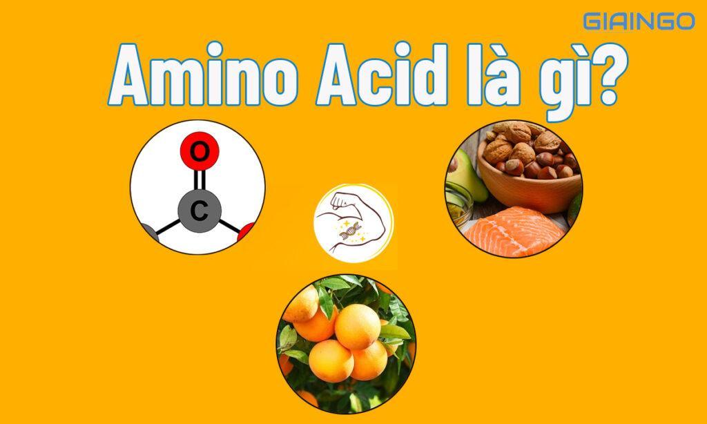 Tìm hiểu Amino Acid là gì?