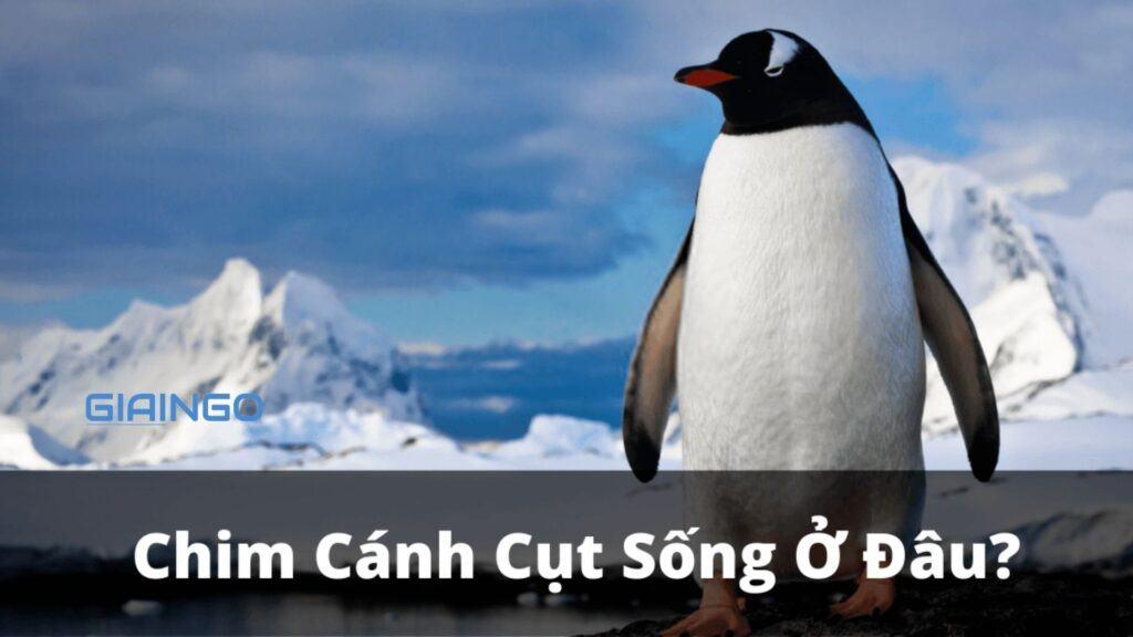chim canh cut song o dau