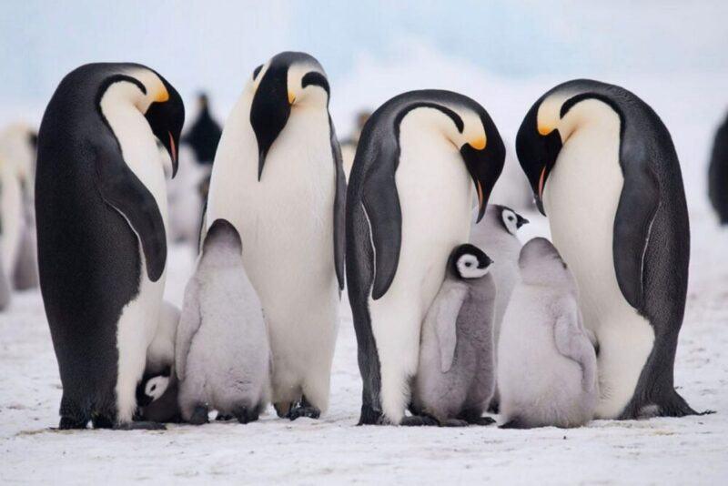 chim cánh cụt sống ở đâu