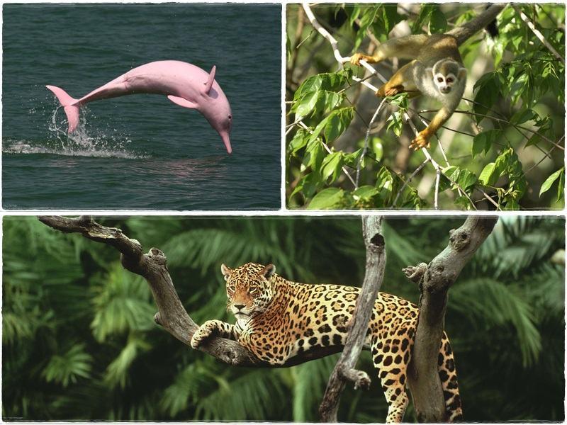 tại sao phải đặt vấn đề bảo vệ rừng amazon?