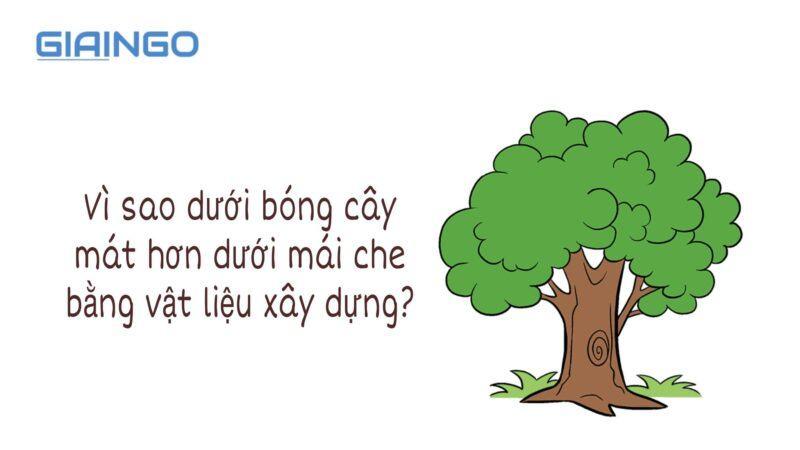 https://giaingo.info/vi-sao-duoi-bong-cay-mat-hon-duoi-mai-che-bang-vat-lieu-xay-dung/