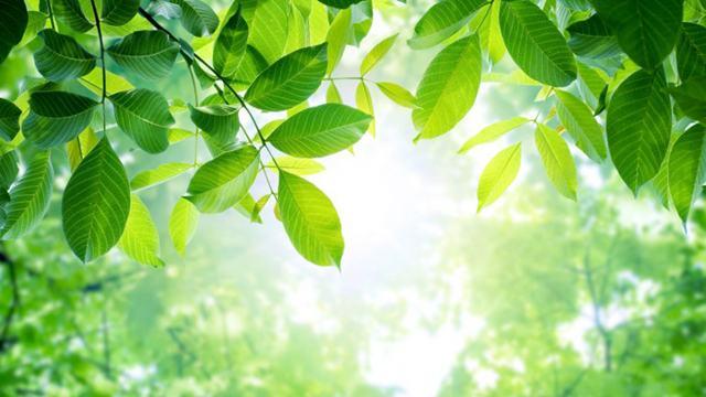 Giải thích vì sao cây trên cạn bị ngập úng lâu sẽ chết?