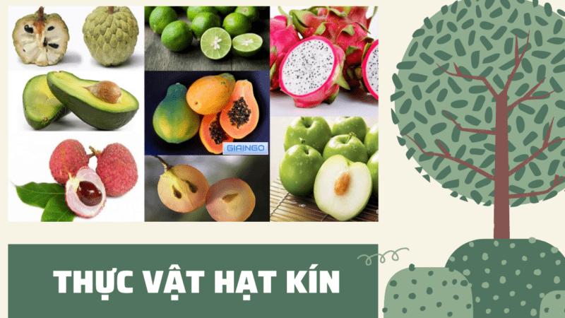https://giaingo.info/vi-sao-thuc-vat-hat-kin-lai-co-the-phat-trien-da-dang/