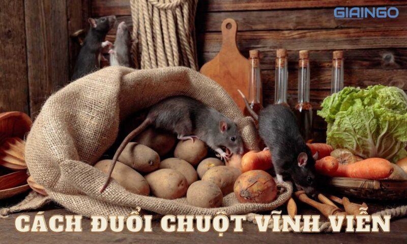 https://giaingo.info/cach-duoi-chuot-vinh-vien/