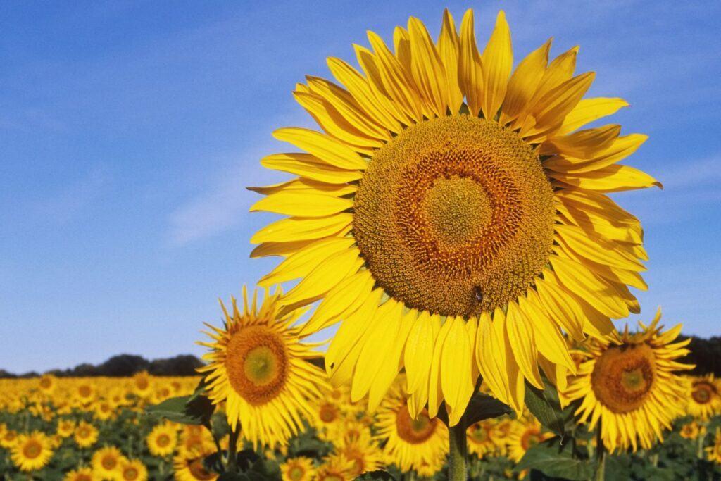 Vì sao thực vật hạt kín lại có thể phát triển đa dạng phong phú như ngày nay?
