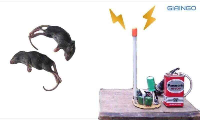Âm thanh đuổi chuột là gì?