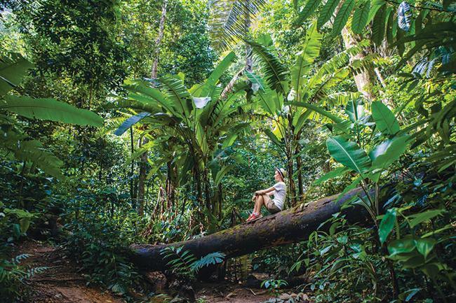 Tại sao phải bảo vệ rừng