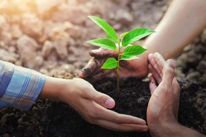 Vì sao phải tích cực trồng cây gây rừng?