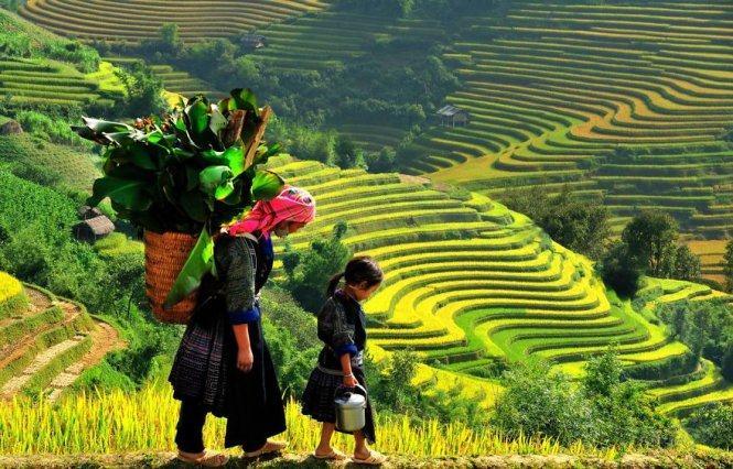 Soạn bài Việt Bắc