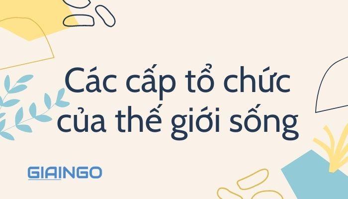 cac cap to chuc cua the gioi song