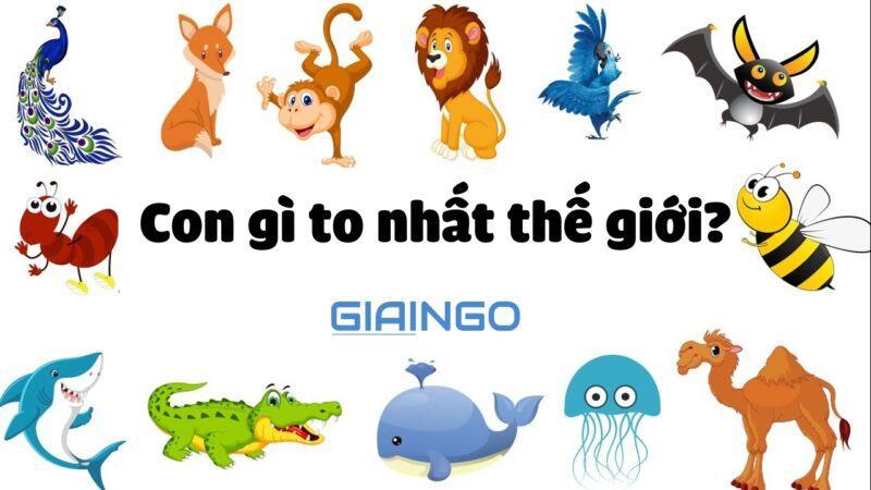 con gi to nhat the gioi 13