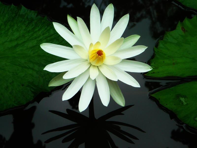 Hoa gì nở về đêm?